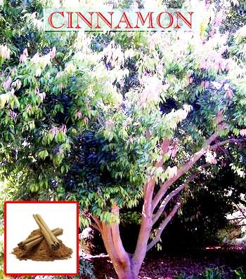 I wonder what a cinammon grove smells like…
