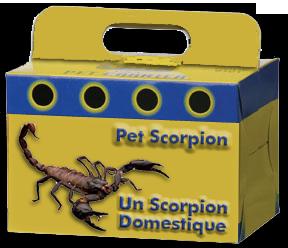 Pet Scorpion